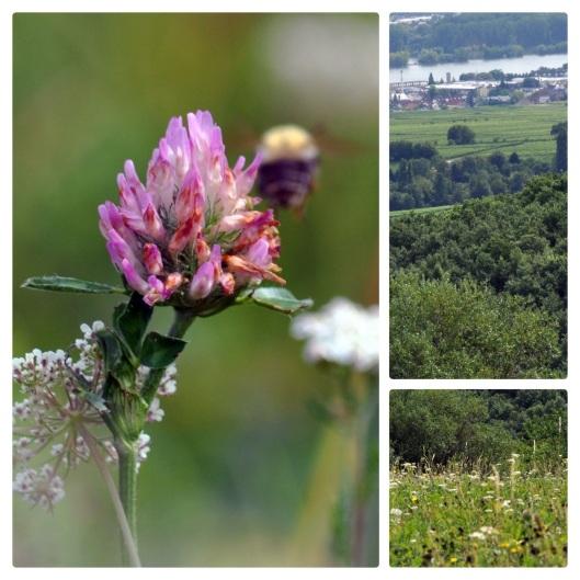 meadow6.jpg