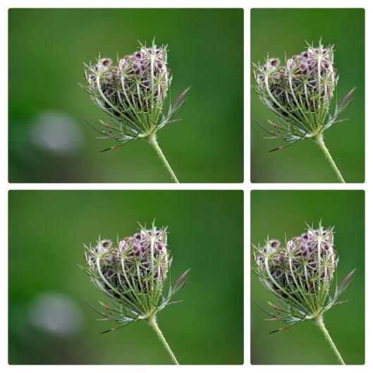 meadow10